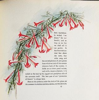 The Procession of Flowers in Colorado by Helen Jackson (H.H.); illustrated in water colors by Alice A. Stewart