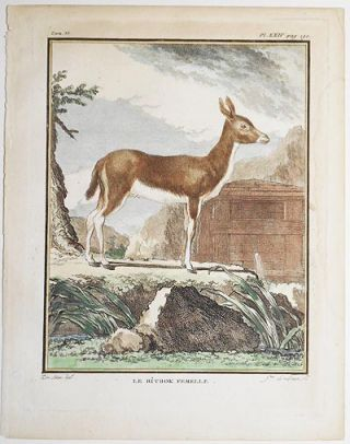 Le Ritbok Femelle [1 handcolored copperplate engraving of an antelope from Buffon's Histoire Naturelle]