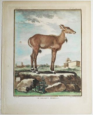 Le Nilgaut Femelle [1 handcolored copperplate engraving of an antelope Nilgaut (Boselaphus tragocamelus) from Buffon's Histoire Naturelle]