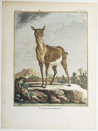 L'Antilope Femelle [1 handcolored copperplate engraving of an antelope from Buffon's Histoire Naturelle]