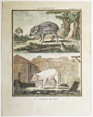 Le Marcassin [and] Le Cochon de Lait [1 handcolored copperplate engraving of a wild boar and a domesticated pig from Buffon's Histoire Naturelle]