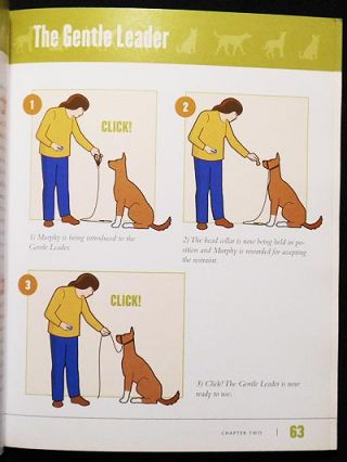 Click! Dog Training System: The Easiest, Most Effective Way to Train Your Dog